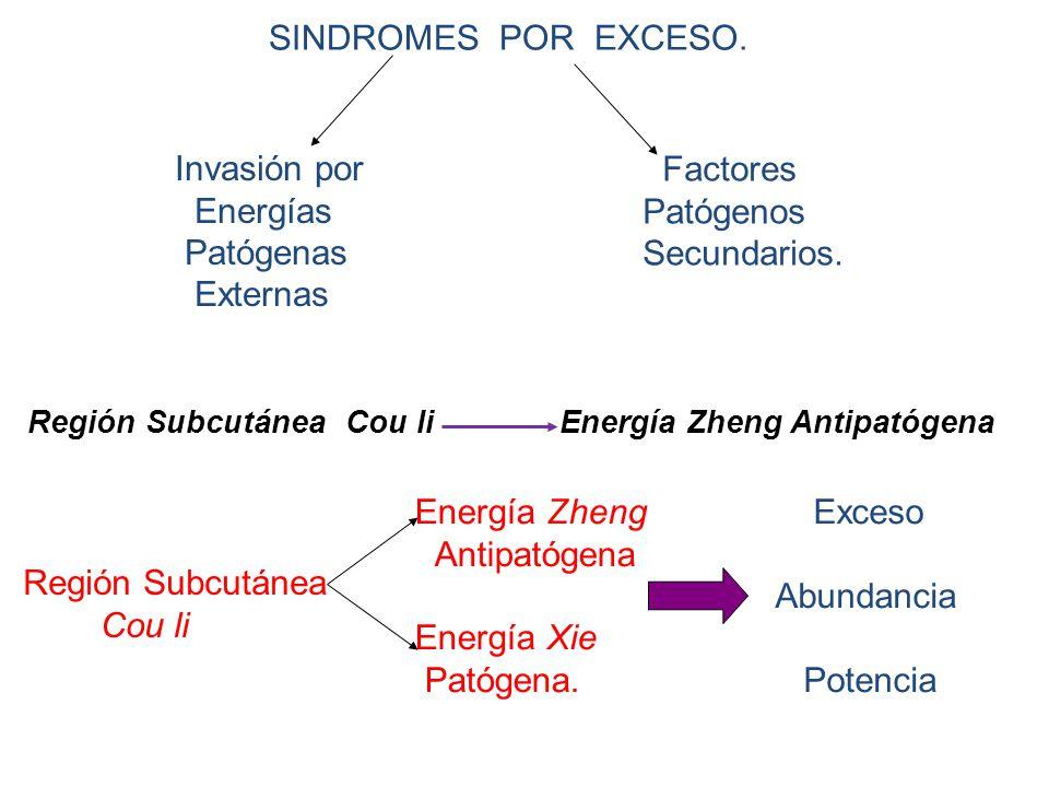 SINDROMES POR EXCESO.Invasión por Energías Patógenas Externas Factores Patógenos Secundarios.