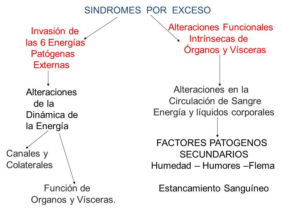 SINDROMES POR EXCESO Invasión de las 6 Energías Patógenas Externas Alteraciones de la Dinámica de la Energía Canales y Colaterales Función de Organos y Vísceras.
