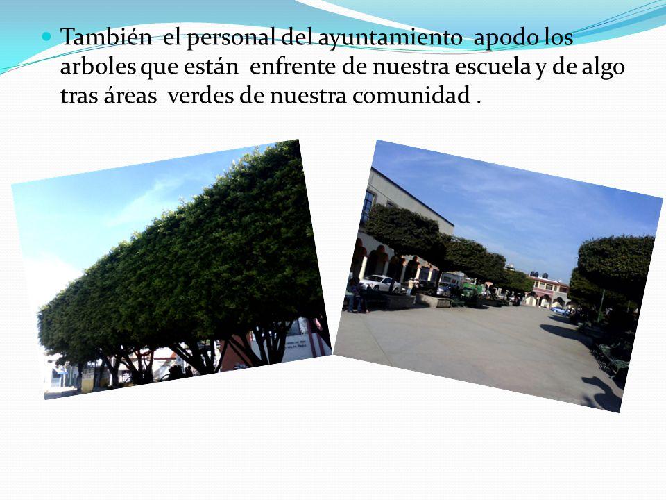 También el personal del ayuntamiento apodo los arboles que están enfrente de nuestra escuela y de algo tras áreas verdes de nuestra comunidad.