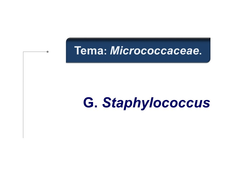 G. Staphylococcus Tema : Micrococcaceae.