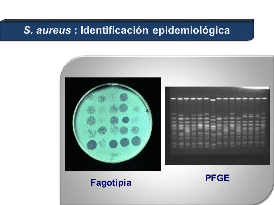 Fagotípia PFGE S. aureus : Identificación epidemiológica
