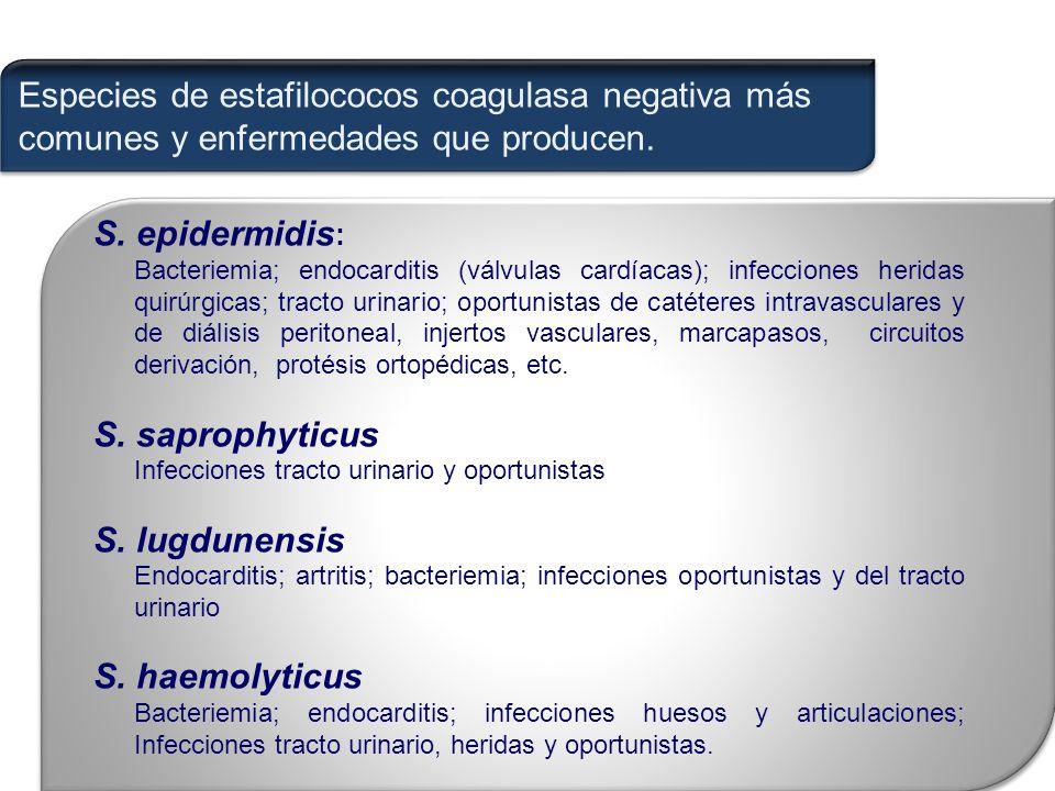 Especies de estafilococos coagulasa negativa más comunes y enfermedades que producen.