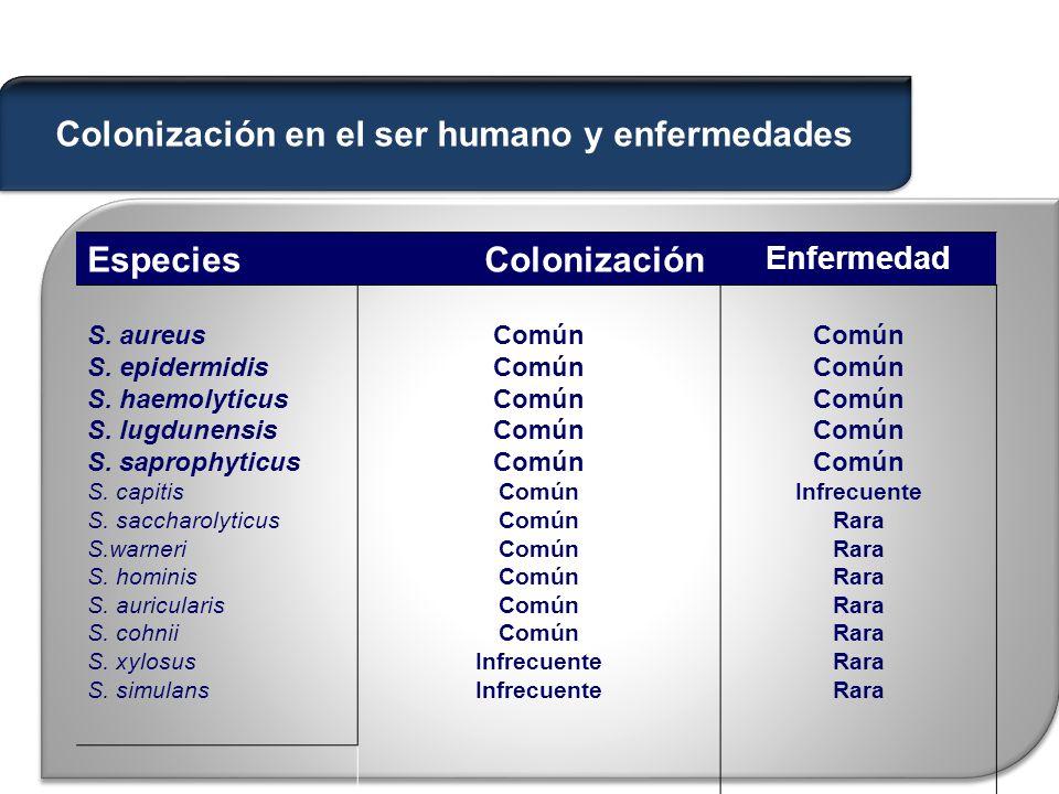 Especies Colonización Enfermedad S.aureus S. epidermidis S.