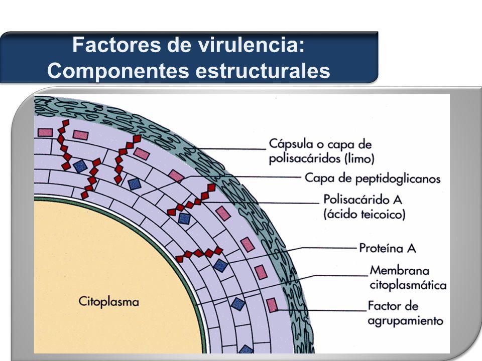  Citotoxinas: alfa-, beta-, delta- y gamma- toxina.