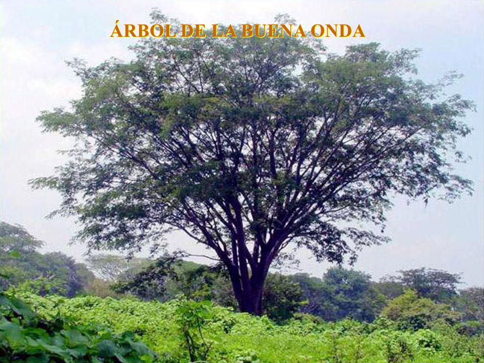ÁRBOL DE LA BUENA ONDA