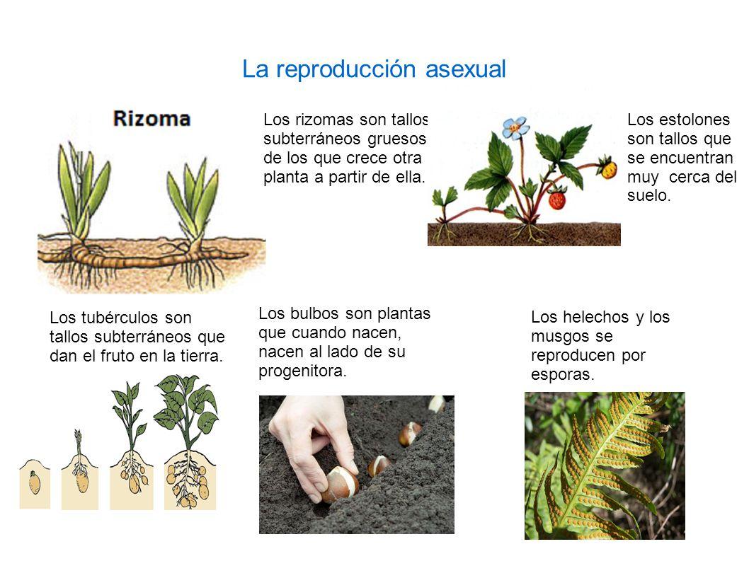 Reproduccion asexual en plantas pdf file