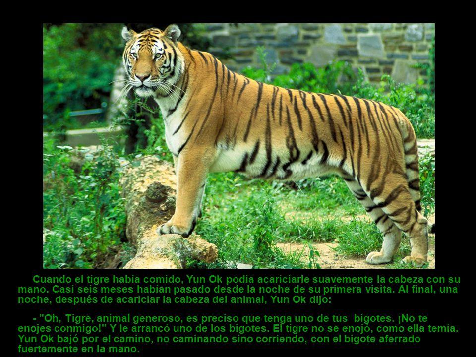 Lo mismo ocurrió a la noche siguiente, y esta vez estaban tan cerca que Yun Ok pudo hablar al tigre con una voz suave y tranquilizadora.