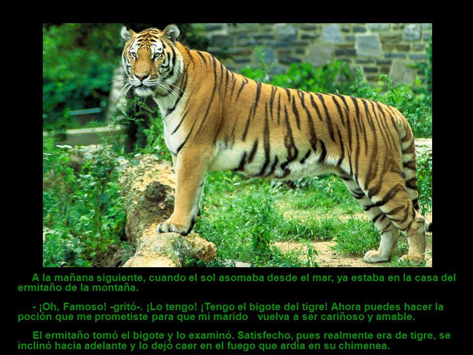 Cuando el tigre había comido, Yun Ok podía acariciarle suavemente la cabeza con su mano. Casi seis meses habían pasado desde la noche de su primera vi