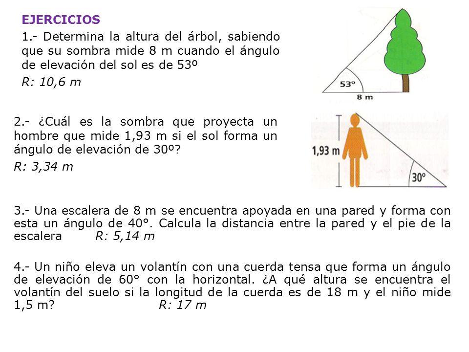 EJERCICIOS 1.- Determina la altura del árbol, sabiendo que su sombra mide 8 m cuando el ángulo de elevación del sol es de 53º R: 10,6 m 2.- ¿Cuál es la sombra que proyecta un hombre que mide 1,93 m si el sol forma un ángulo de elevación de 30º.