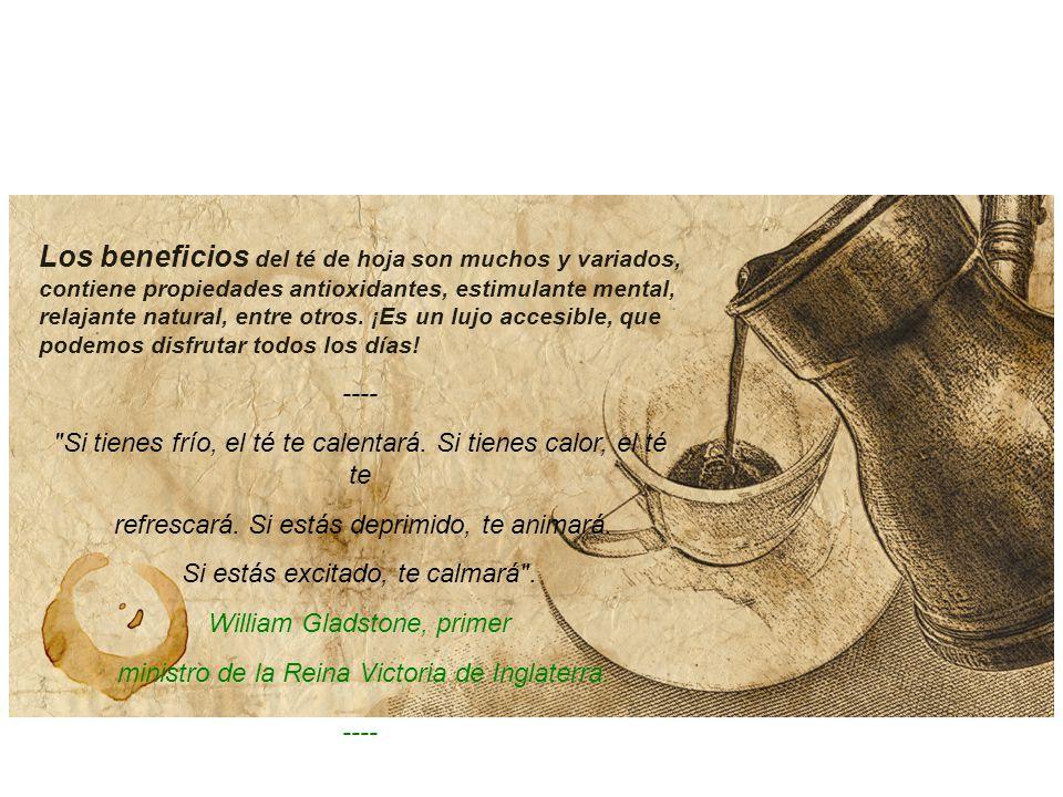 Los beneficios del té de hoja son muchos y variados, contiene propiedades antioxidantes, estimulante mental, relajante natural, entre otros.