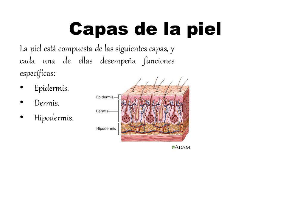 Capas de la piel La piel está compuesta de las siguientes capas, y cada una de ellas desempeña funciones específicas: Epidermis. Dermis. Hipodermis.