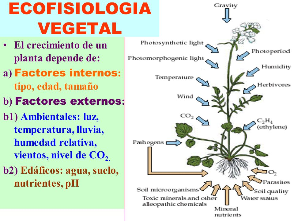 crecimiento de una planta depende de factores internos TIPO DE PLANTA