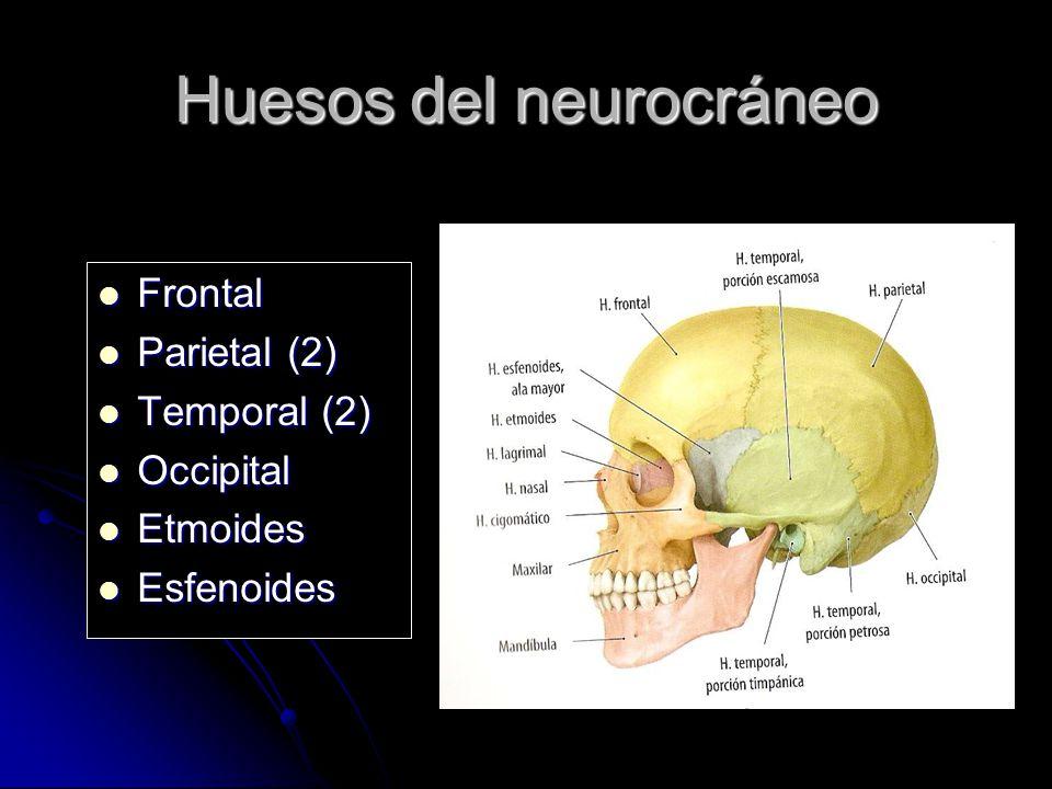 Huesos del neurocráneo Frontal Frontal Parietal (2) Parietal (2) Temporal (2) Temporal (2) Occipital Occipital Etmoides Etmoides Esfenoides Esfenoides