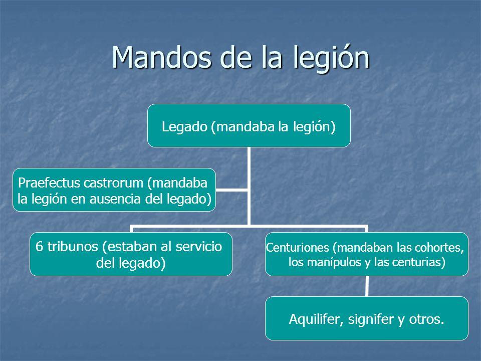 Mandos de la legión Legado (mandaba la legión) 6 tribunos (estaban al servicio del legado) Centuriones (mandaban las cohortes, los manípulos y las centurias) Aquilifer, signifer y otros.