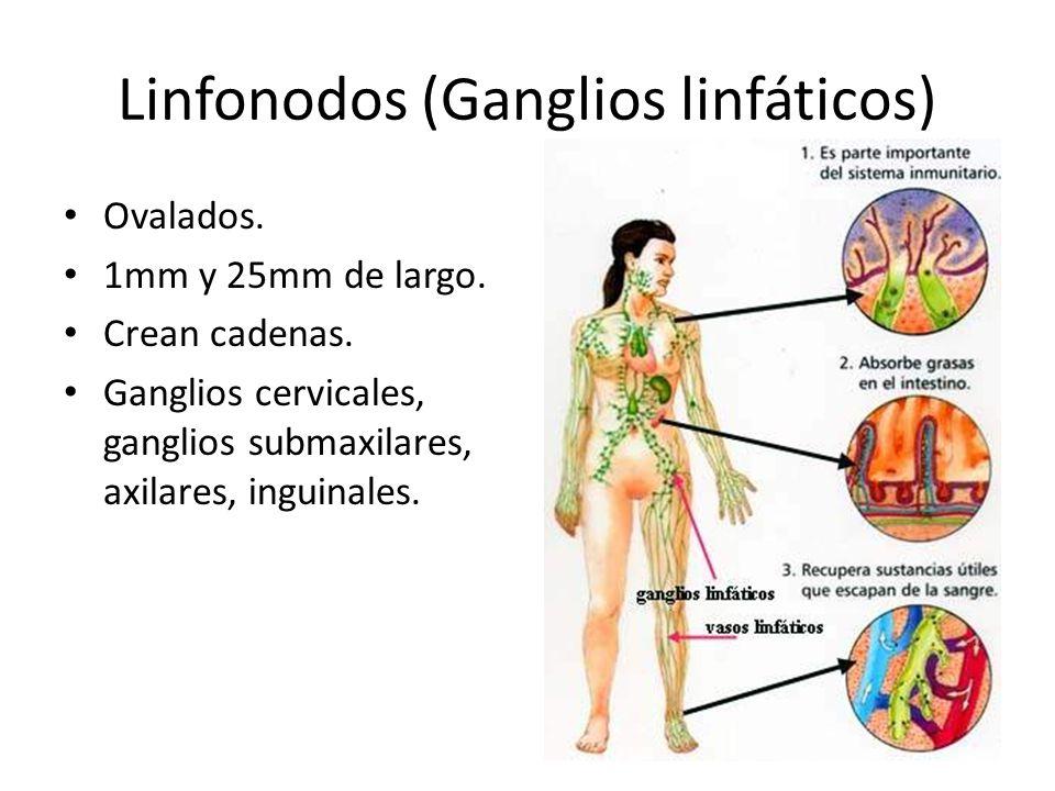 Hermosa Ganglio Linfático Inguinal Embellecimiento - Imágenes de ...