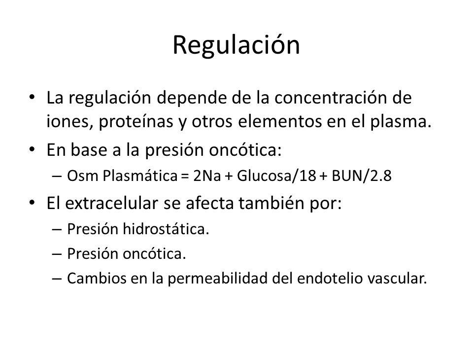 Regulación La regulación depende de la concentración de iones, proteínas y otros elementos en el plasma.