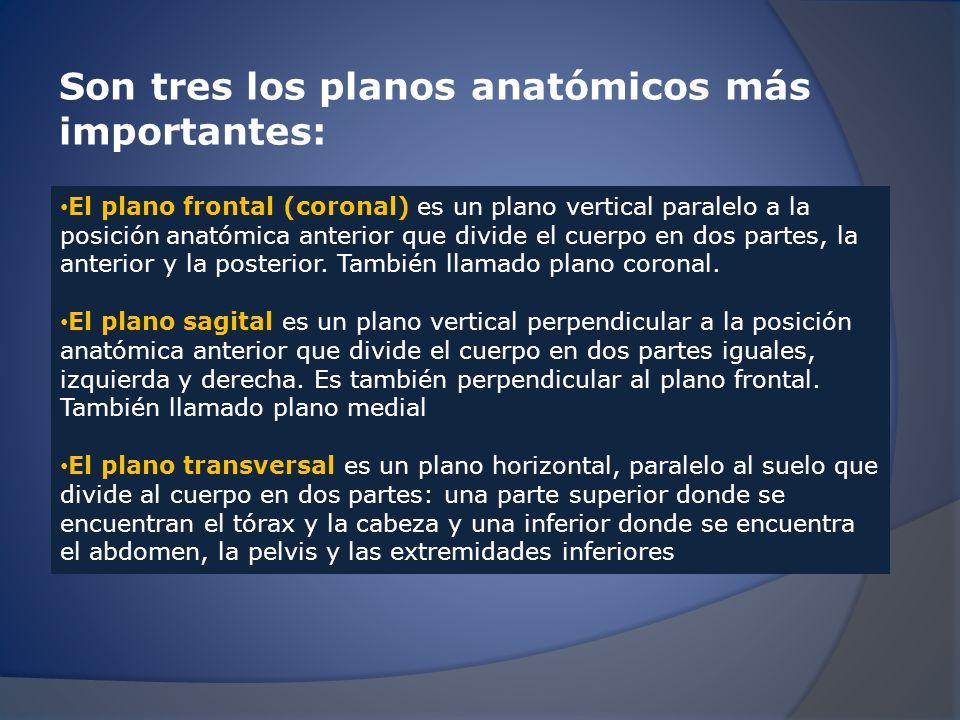 Planos anatómicos más importantes