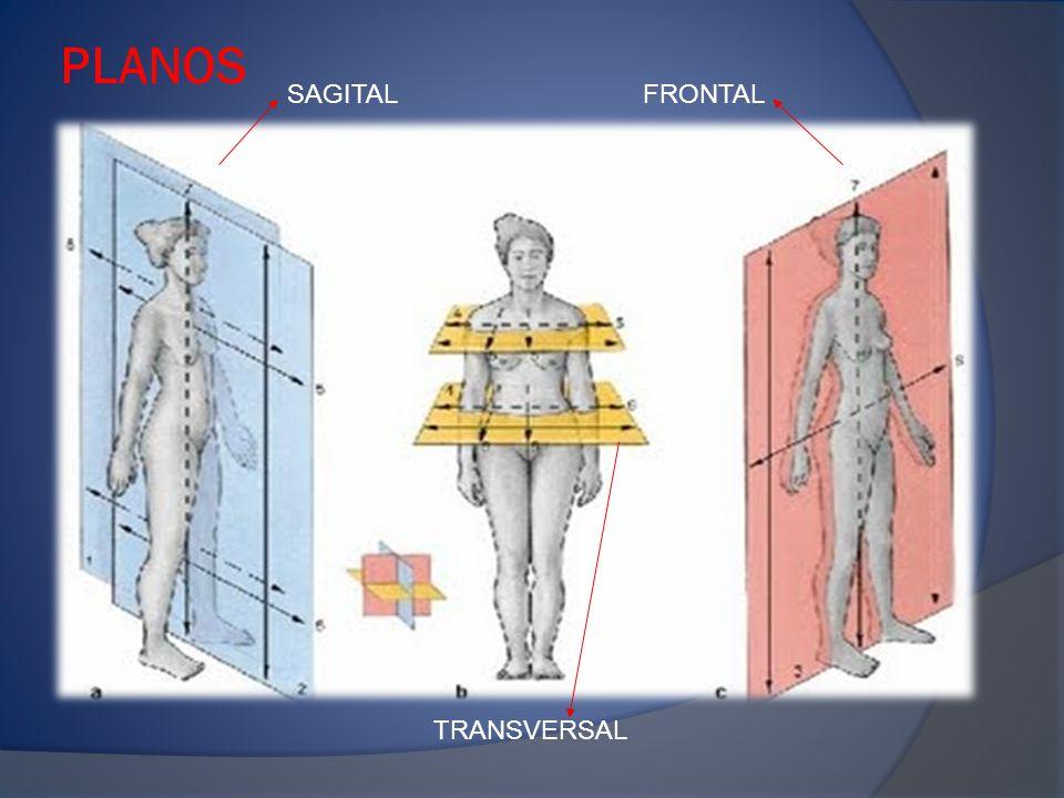 Plano Frontal: Contiene los ejes céfalo-caudal y latero-lateral.