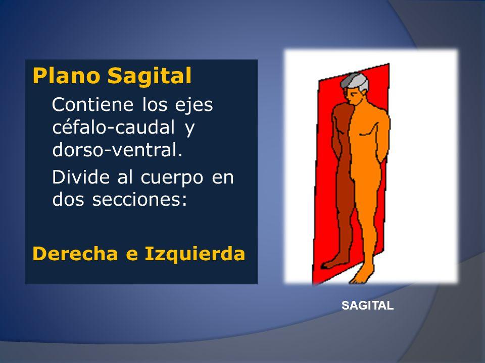 Plano Transversal Contiene los ejes latero- lateral y dorso-ventral Divide al cuerpo en dos secciones: SUPERIOR E INFERIOR