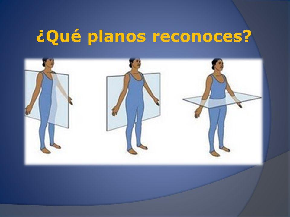 ¿Qué planos y ejes reconoces?