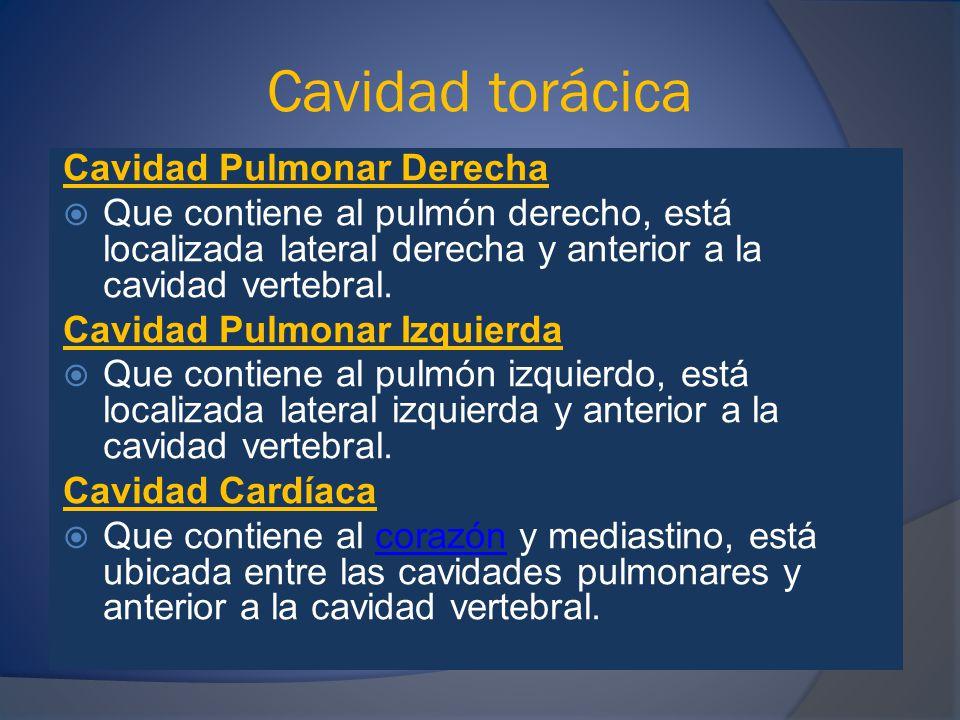 Cavidad abdominal SUPERIORESIHipocondrio derecho IIEpigastrio IIIHipocondrio izquierdo INTERMEDIOSIVFlanco derecho VRegión umbilical VIFlanco izquierdo INFERIORESVIIFosa ilíaca derecha VIIIHipogastrio IXFosa ilíaca izquierda