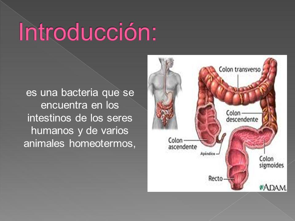 es una bacteria que se encuentra en los intestinos de los seres ...