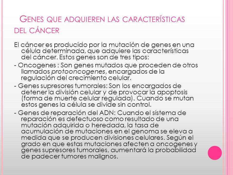 G ENES QUE ADQUIEREN LAS CARACTERÍSTICAS DEL CÁNCER El cáncer es producido por la mutación de genes en una célula determinada, que adquiere las características del cáncer.