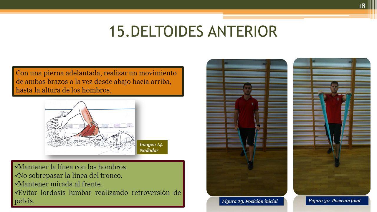 15.DELTOIDES ANTERIOR Con una pierna adelantada, realizar un movimiento de ambos brazos a la vez desde abajo hacia arriba, hasta la altura de los hombros.