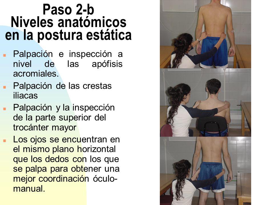 Paso 2-b Niveles anatómicos en la postura estática n Palpación e inspección a nivel de las apófisis acromiales. n Palpación de las crestas iliacas n P