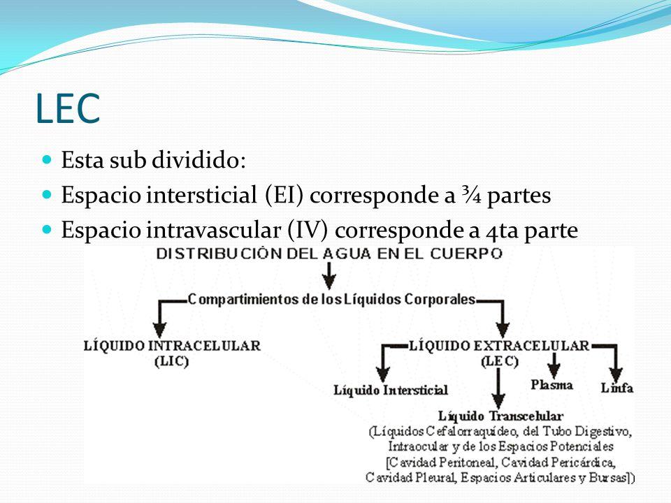 LEC Esta sub dividido: Espacio intersticial (EI) corresponde a ¾ partes Espacio intravascular (IV) corresponde a 4ta parte