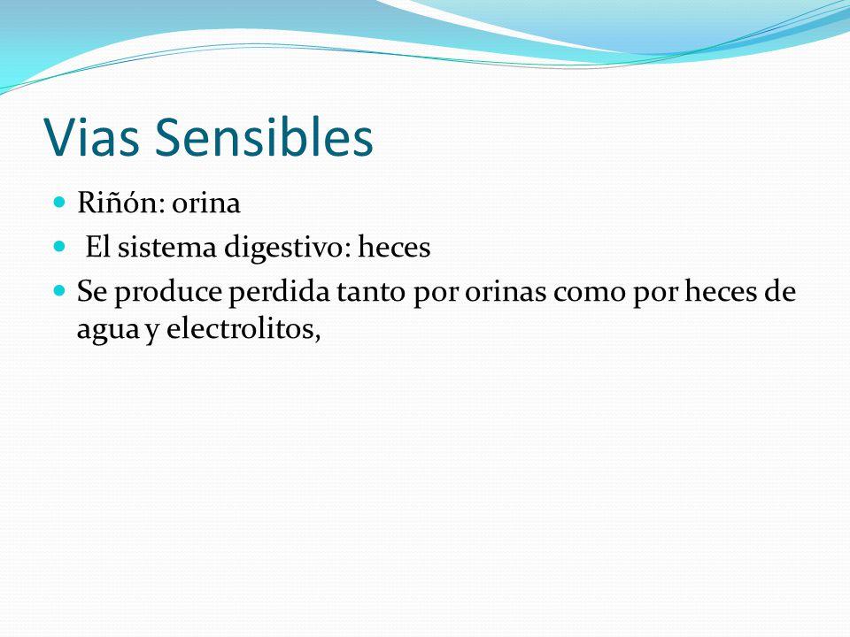 Vias Sensibles Riñón: orina El sistema digestivo: heces Se produce perdida tanto por orinas como por heces de agua y electrolitos,