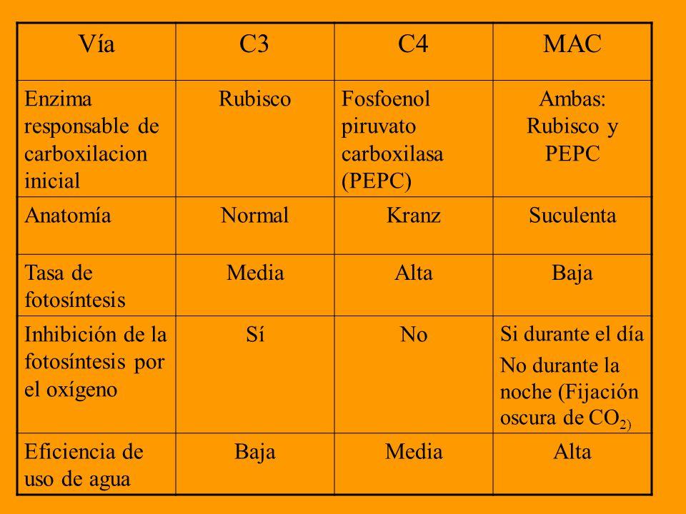 54 VíaC3C4MAC ...