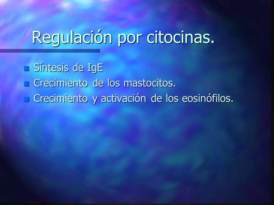 Regulación por citocinas.n Síntesis de IgE n Crecimiento de los mastocitos.