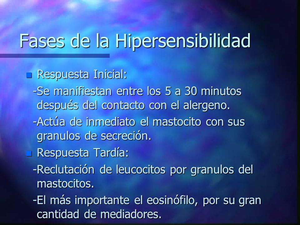 Fases de la Hipersensibilidad n Respuesta Inicial: -Se manifiestan entre los 5 a 30 minutos después del contacto con el alergeno.