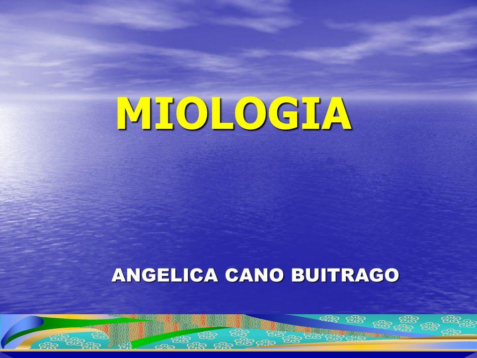 MIOLOGIA ANGELICA CANO BUITRAGO