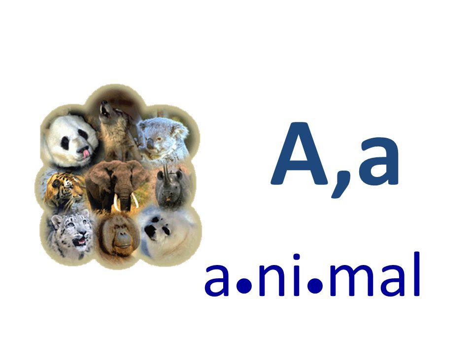A,a a ● ni ● mal