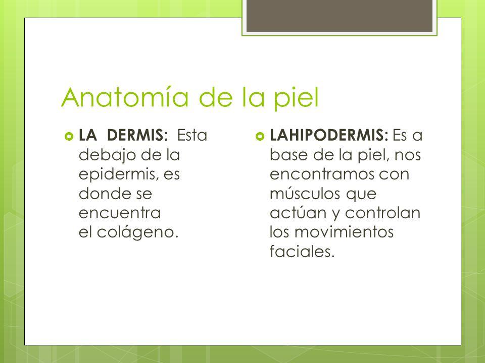 Anatomía de la piel  LA DERMIS: Esta debajo de la epidermis, es donde se encuentra el colágeno.