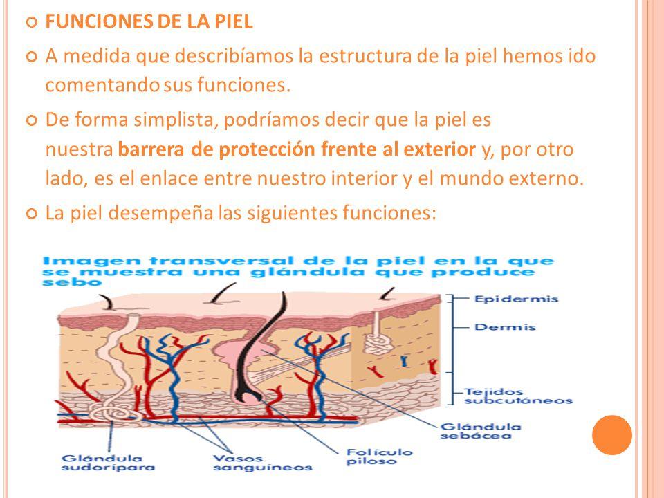 FUNCIONES DE LA PIEL A medida que describíamos la estructura de la piel hemos ido comentando sus funciones.
