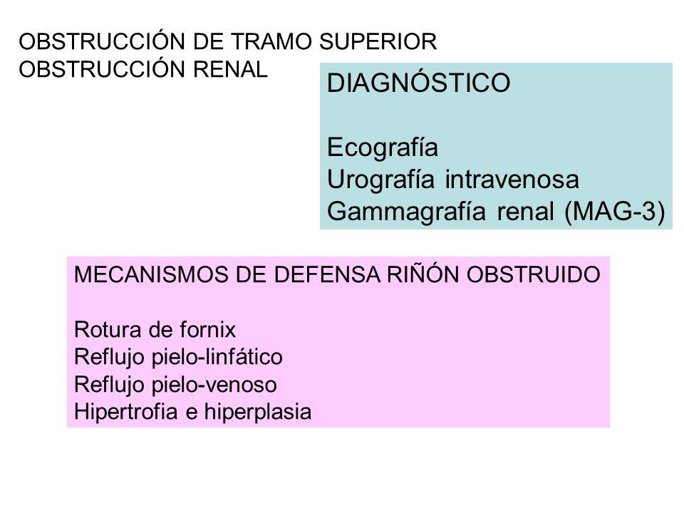 OBSTRUCCIÓN DE TRAMO SUPERIOR OBSTRUCCIÓN RENAL DIAGNÓSTICO Ecografía Urografía intravenosa Gammagrafía renal (MAG-3) MECANISMOS DE DEFENSA RIÑÓN OBSTRUIDO Rotura de fornix Reflujo pielo-linfático Reflujo pielo-venoso Hipertrofia e hiperplasia