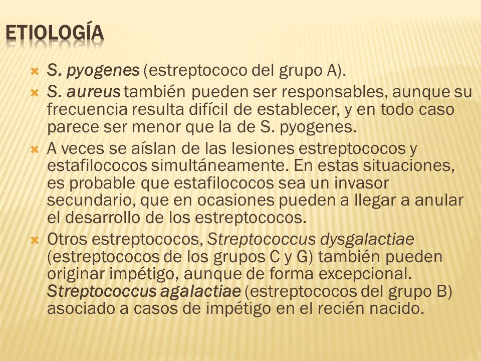  S. pyogenes (estreptococo del grupo A).  S. aureus también pueden ser responsables, aunque su frecuencia resulta difícil de establecer, y en todo c