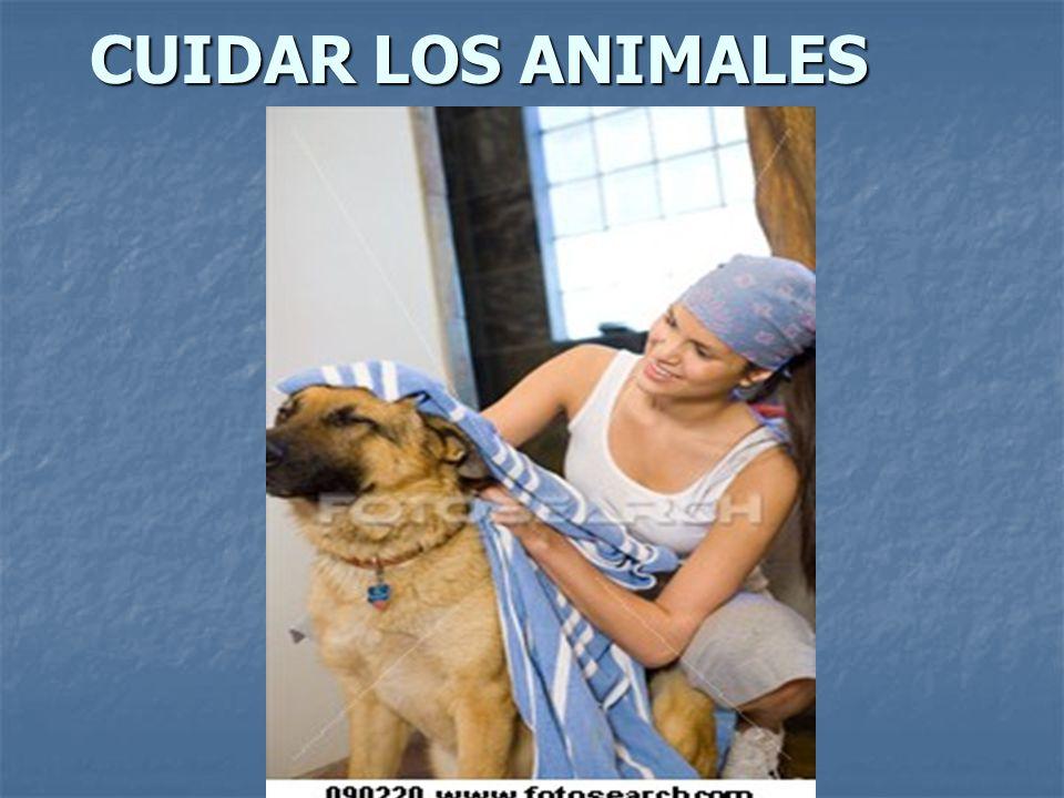 CUIDAR LOS ANIMALES