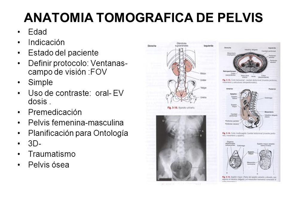 Fantástico Anatomía Femenina De La Pelvis Abdomen Ilustración ...