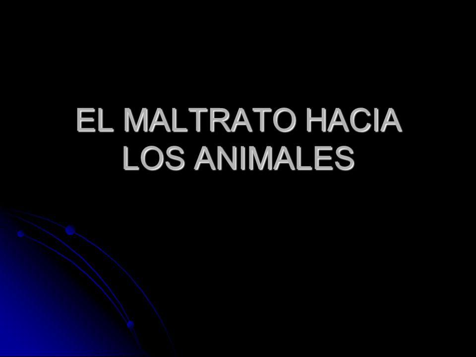 EL MALTRATO HACIA LOS ANIMALES