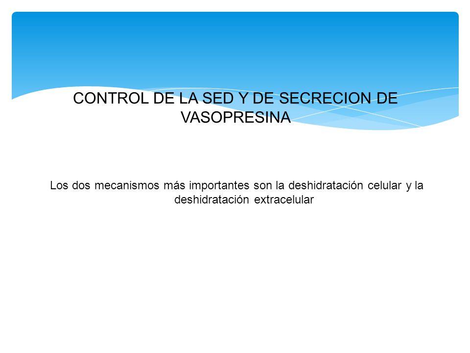 CONTROL DE LA SED Y DE SECRECION DE VASOPRESINA Los dos mecanismos más importantes son la deshidratación celular y la deshidratación extracelular