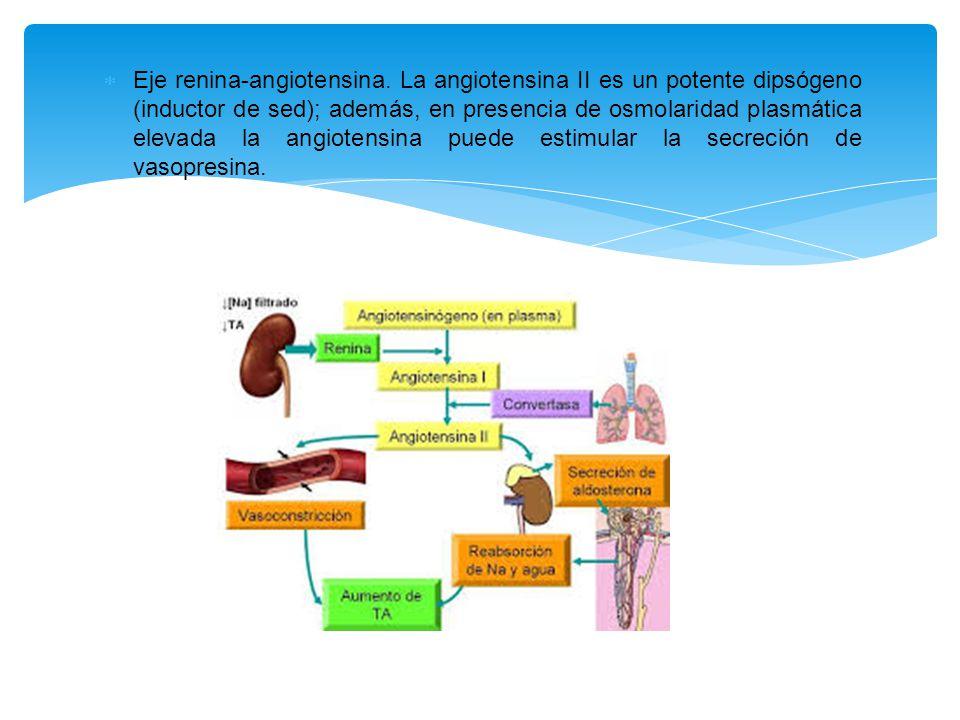  Eje renina-angiotensina.