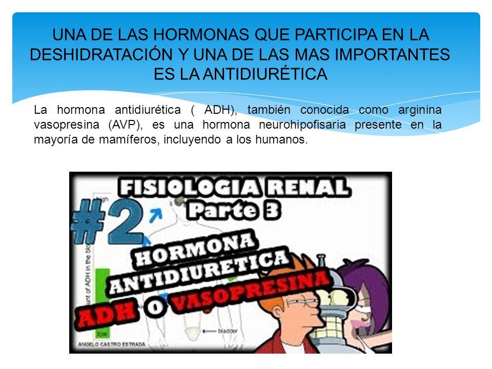 UNA DE LAS HORMONAS QUE PARTICIPA EN LA DESHIDRATACIÓN Y UNA DE LAS MAS IMPORTANTES ES LA ANTIDIURÉTICA La hormona antidiurética ( ADH), también conocida como arginina vasopresina (AVP), es una hormona neurohipofisaria presente en la mayoría de mamíferos, incluyendo a los humanos.