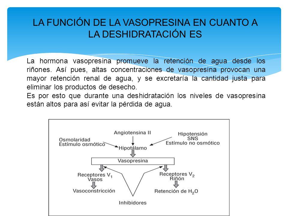 LA FUNCIÓN DE LA VASOPRESINA EN CUANTO A LA DESHIDRATACIÓN ES La hormona vasopresina promueve la retención de agua desde los riñones.