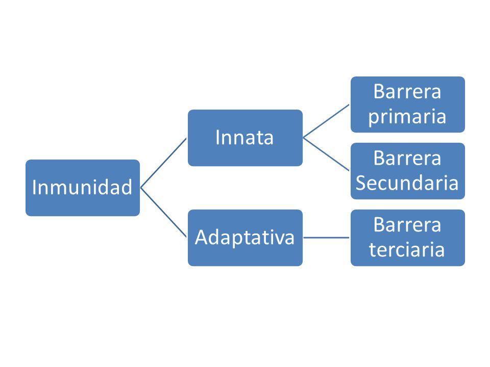 InmunidadInnata Barrera primaria Barrera Secundaria Adaptativa Barrera terciaria