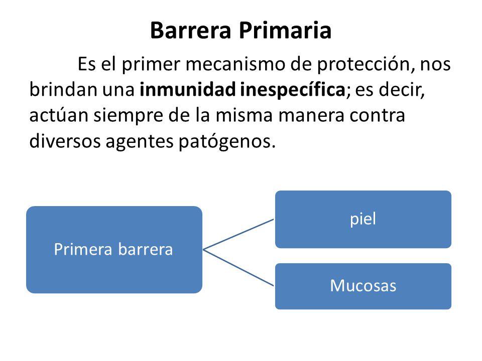 Barrera Primaria Es el primer mecanismo de protección, nos brindan una inmunidad inespecífica; es decir, actúan siempre de la misma manera contra diversos agentes patógenos.