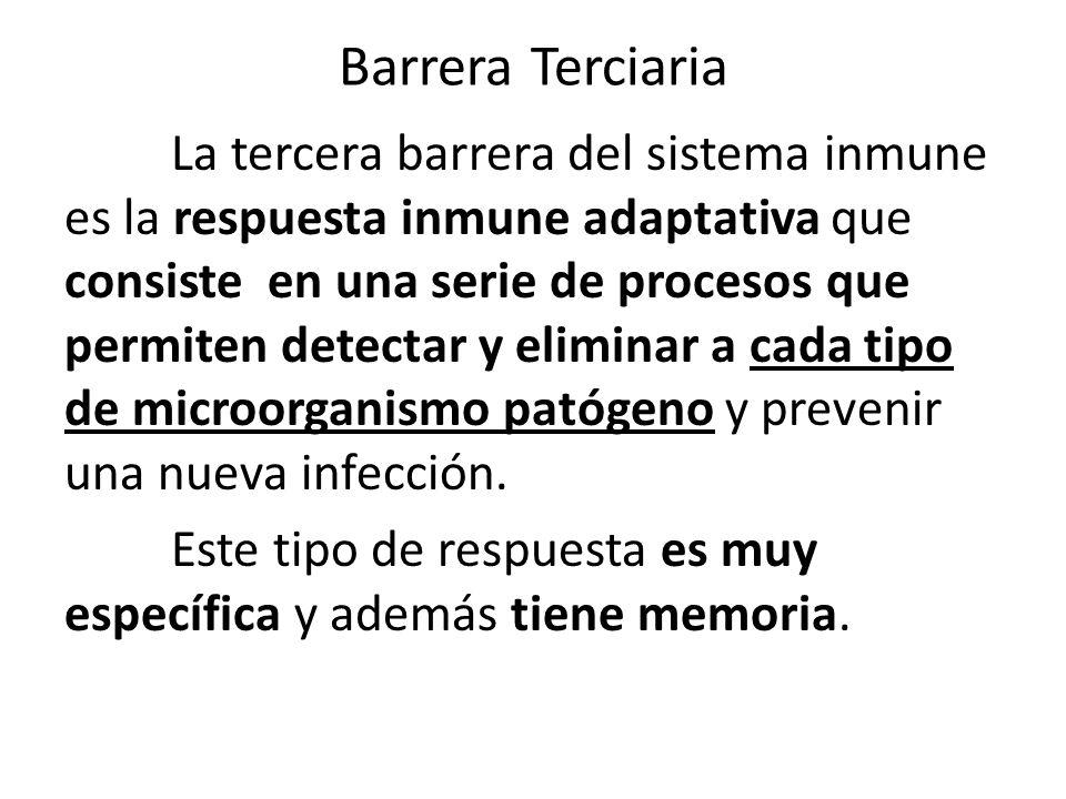 Barrera Terciaria La tercera barrera del sistema inmune es la respuesta inmune adaptativa que consiste en una serie de procesos que permiten detectar y eliminar a cada tipo de microorganismo patógeno y prevenir una nueva infección.
